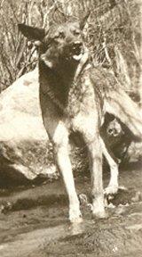 Wolf von Kleist